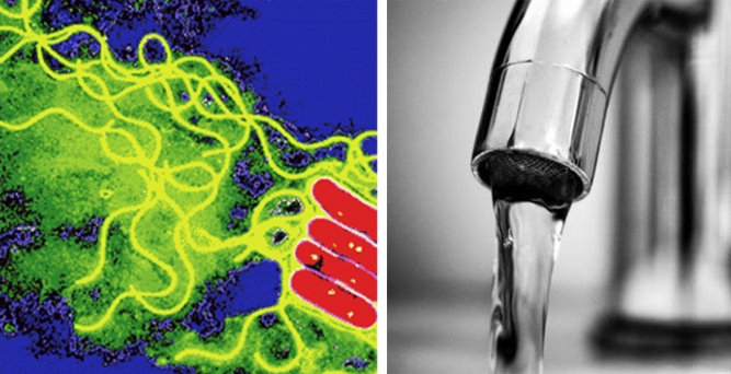Water outlets are a risk factor for Legionella Bacteria